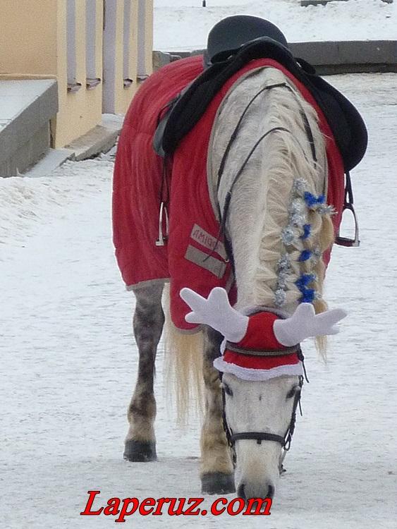 лошадь-олень