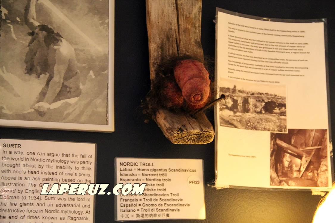 phallological_museum_rejkyavik_10