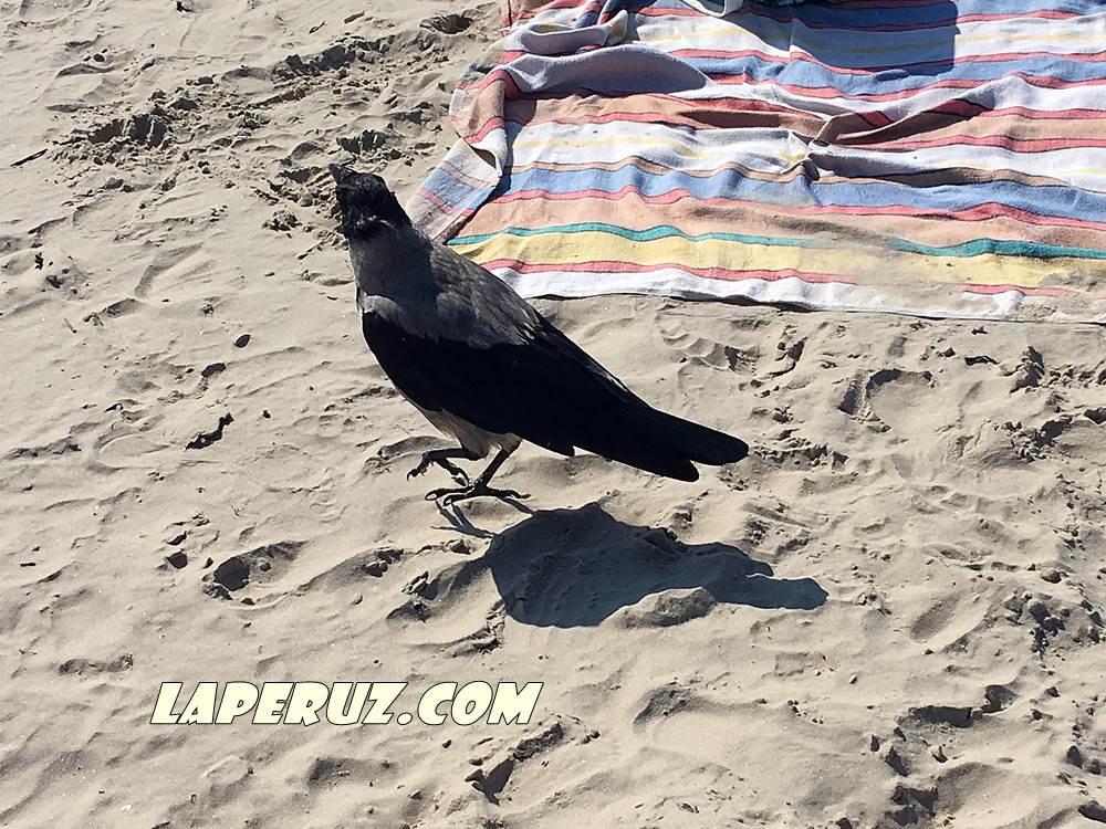 urmala_beach_1
