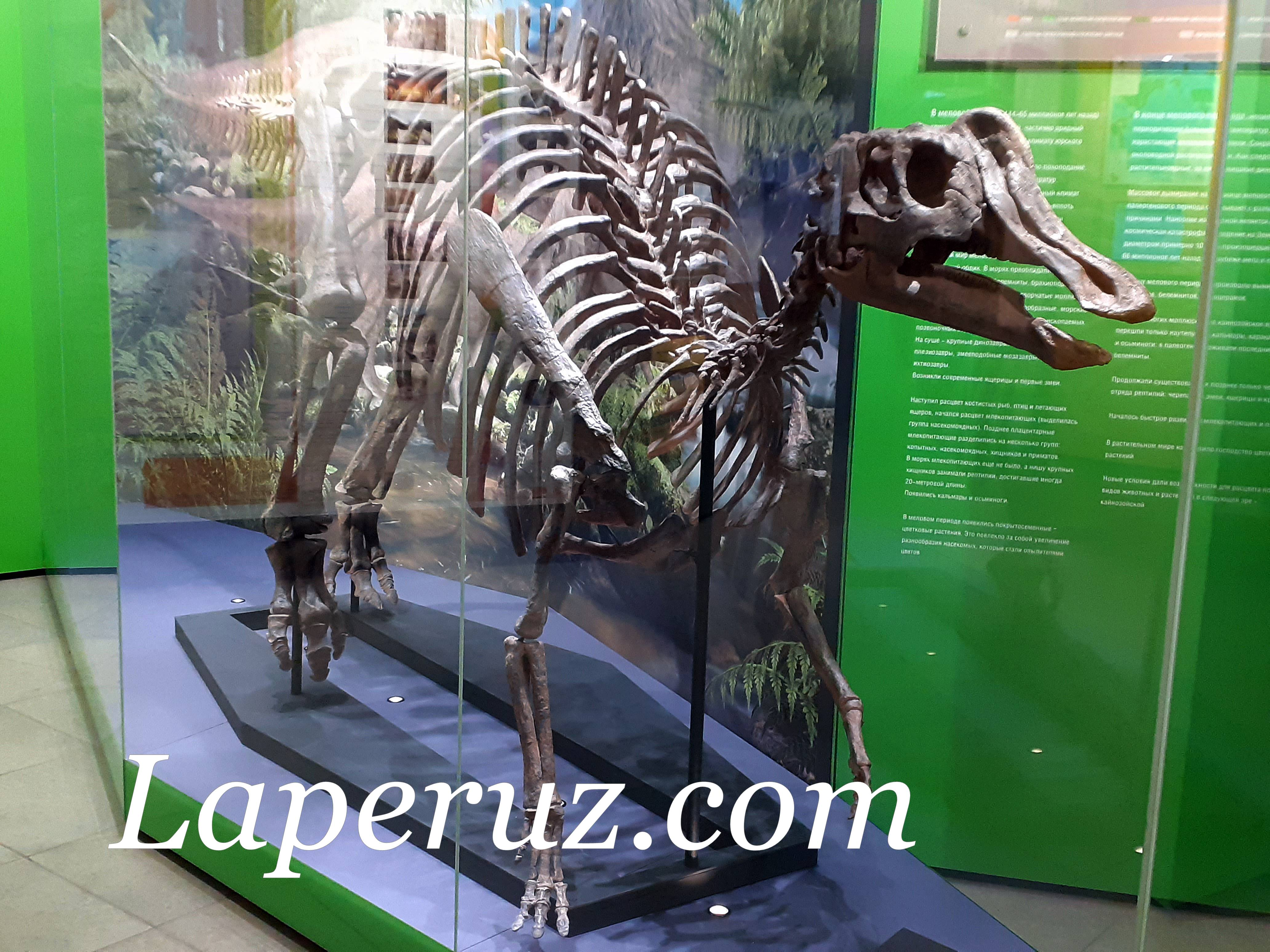 sahalinskii_kraevedcheskii_muzei_dinozavr
