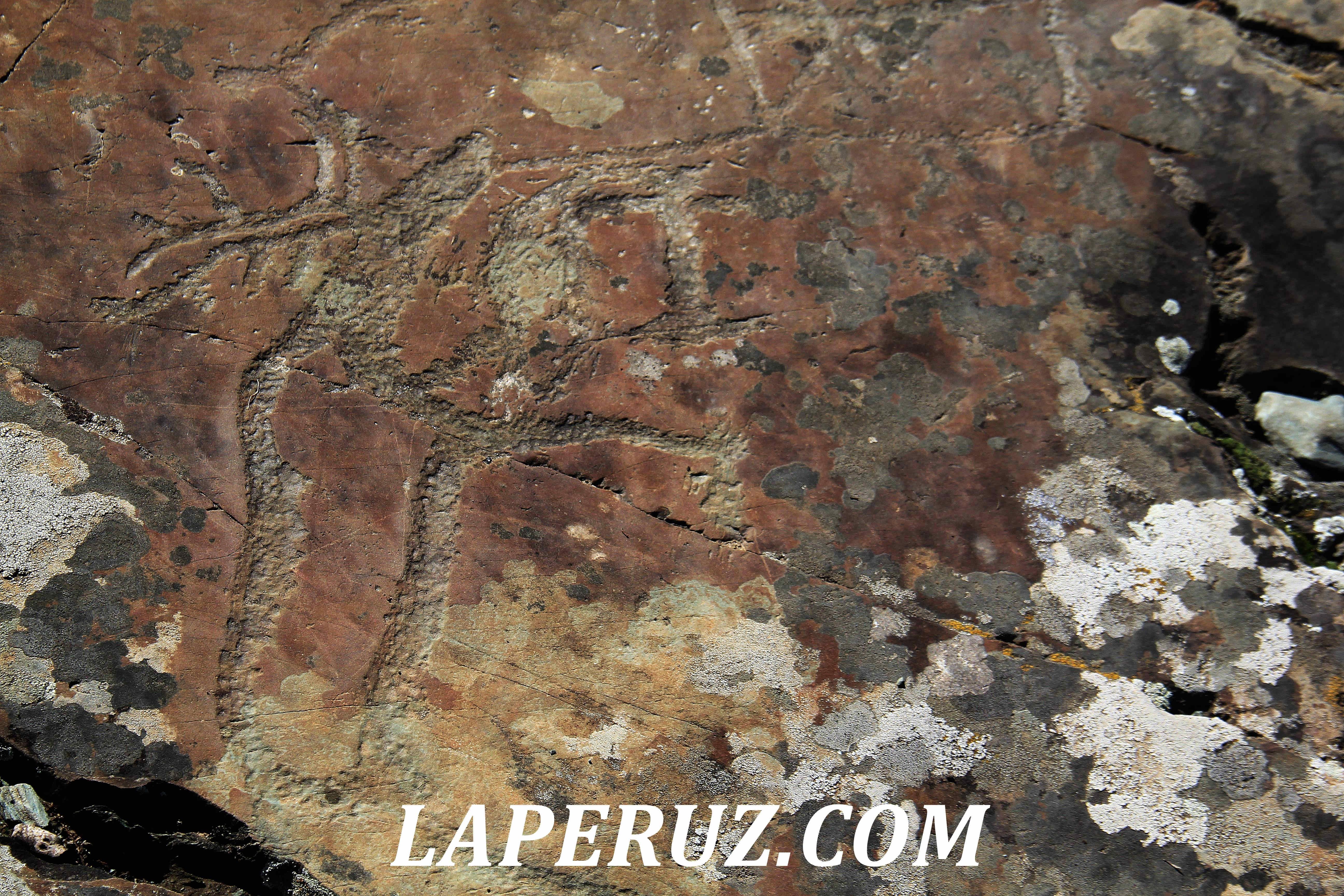 petroglify_altai_13