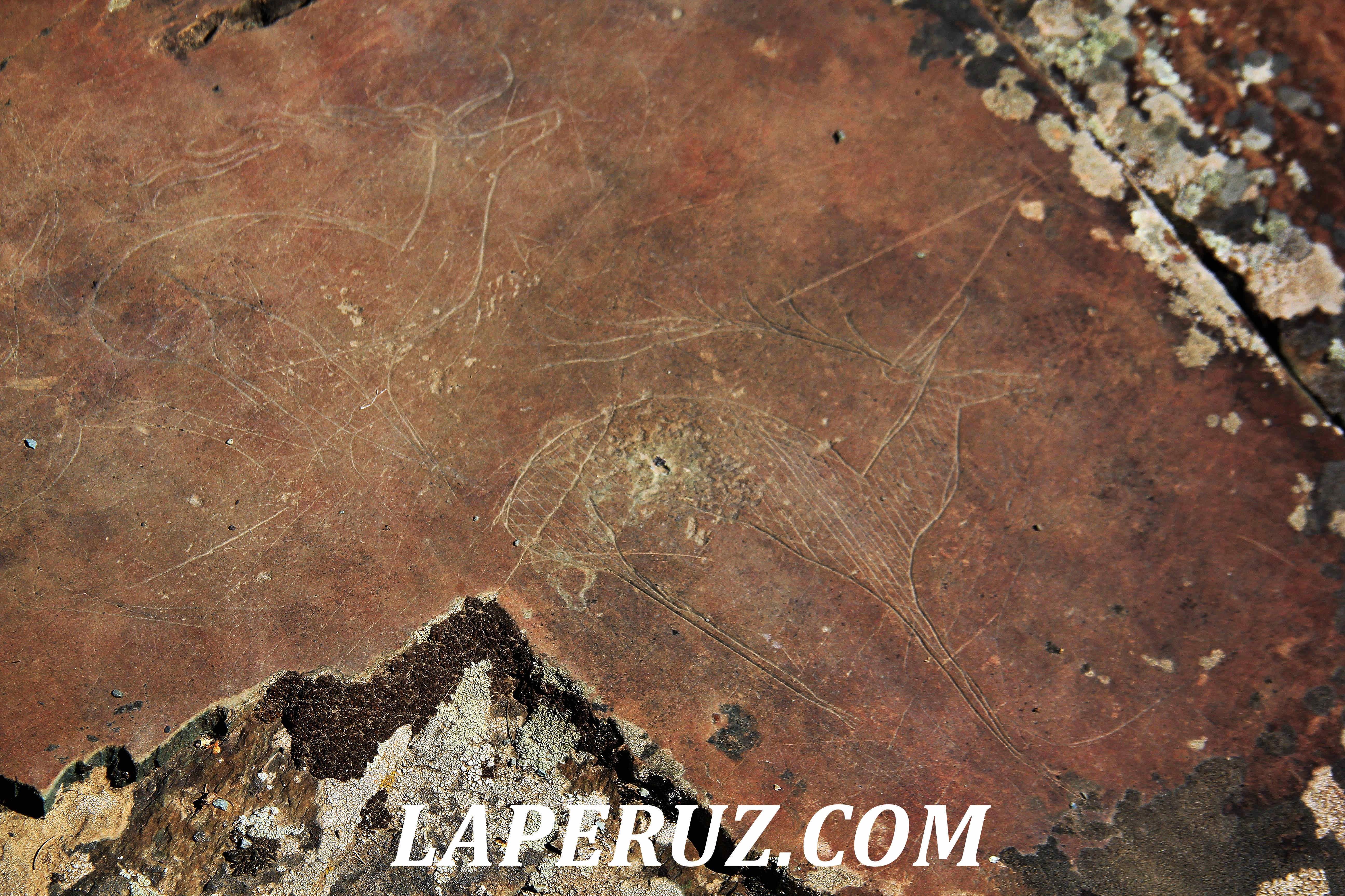 petroglify_altai_18
