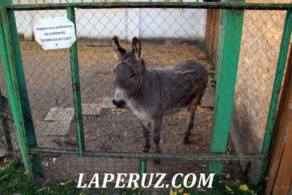 zoopark_preobrajenskii_monastyr_murom_1