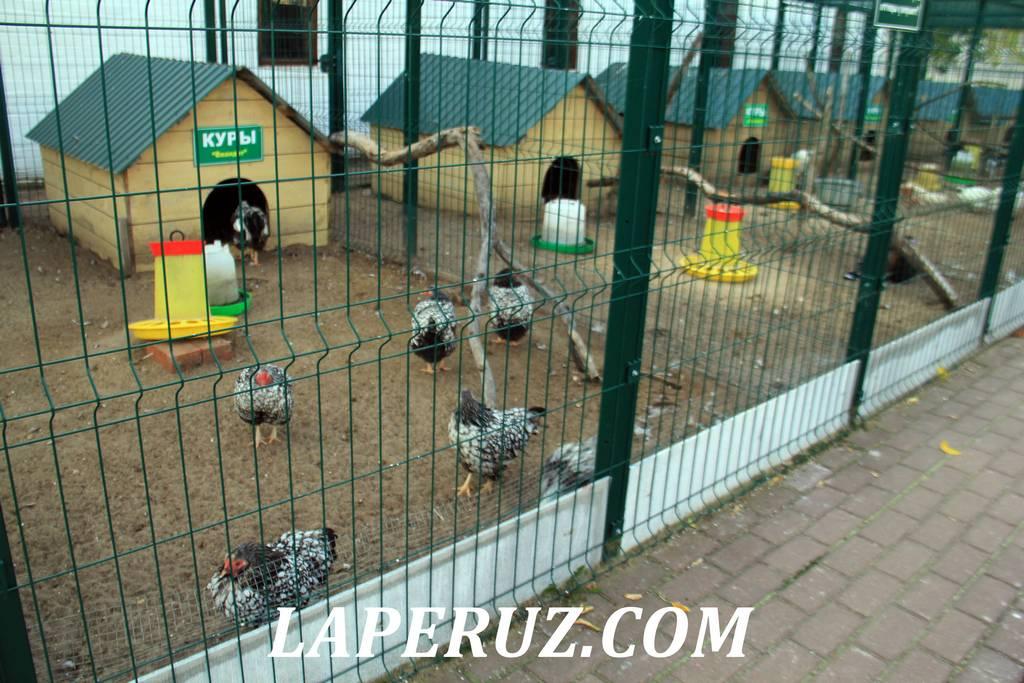 zoopark_preobrajenskii_monastyr_murom_5