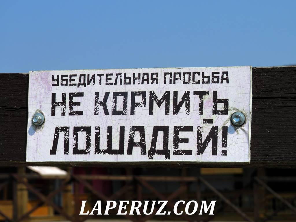 konnyi_dvor_sviyajsk_6