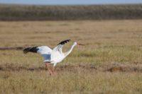 Якутский заказник может стать национальным парком