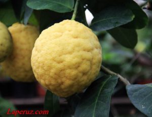 Саратовский лимонарий: самый кислый туристический объект области