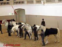Испанская школа верховой езды: серая гордость Австрии