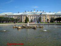 Петергоф и Санкт-Петербург свяжет скоростной трамвай