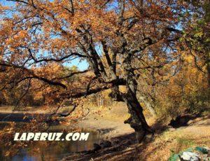 Кумысная поляна — «зелёные лёгкие» Саратова