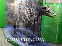 Музей в Южно-Сахалинске. Японский замок с динозаврами