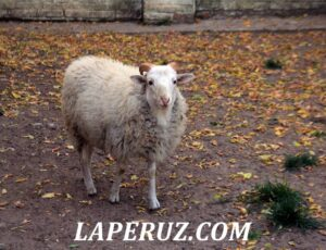 Муром. Древний монастырь с зоопарком